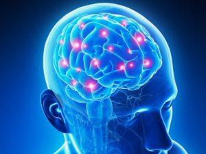 brainpop4.com